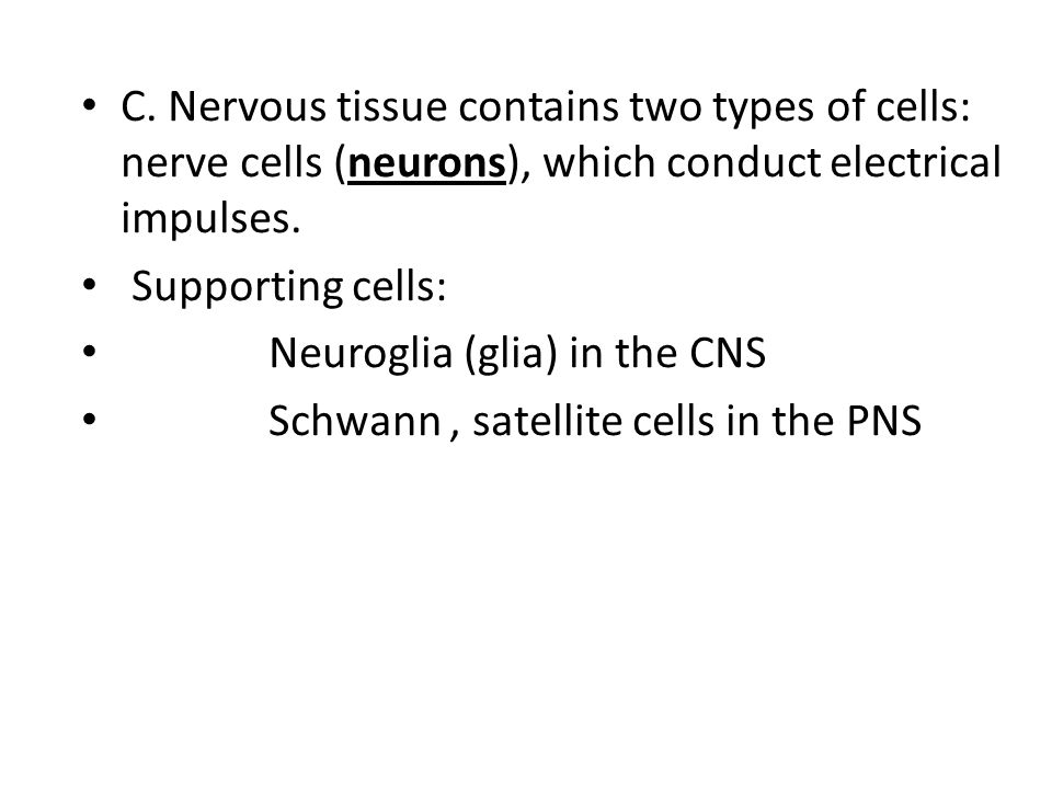 C. Nervous tissue contains two types of cells: nerve cells (neurons), which conduct electrical impulses. Supporting cells: Neuroglia (glia) in the CNS