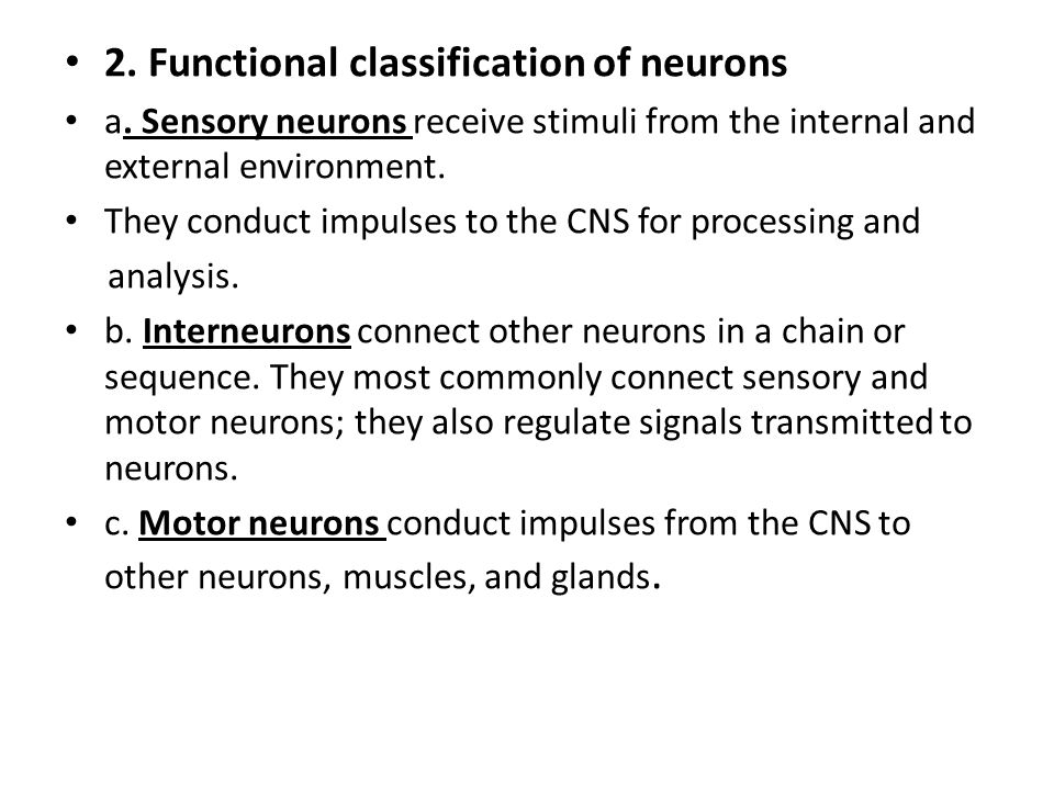 2. Functional classification of neurons a. Sensory neurons receive stimuli from the internal and external environment. They conduct impulses to the CN