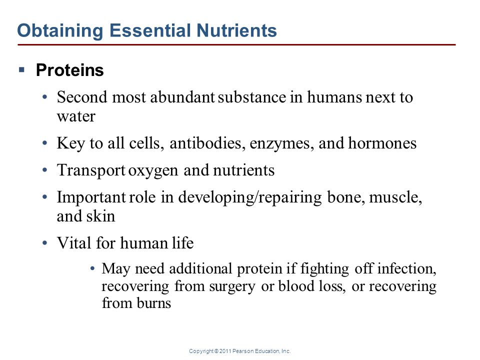 Copyright © 2011 Pearson Education, Inc. Obtaining Essential Nutrients  Proteins Second most abundant substance in humans next to water Key to all ce