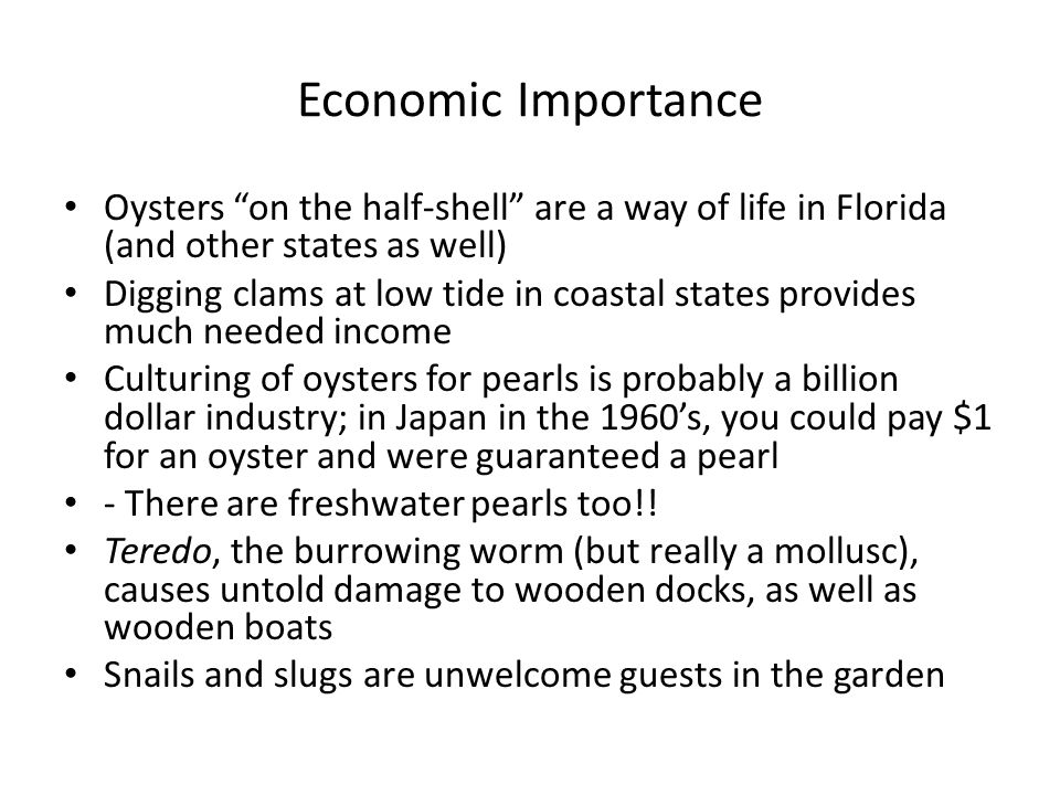 """Economic Importance Oysters """"on the half-shell"""" are a way of life in Florida (and other states as well) Digging clams at low tide in coastal states pr"""