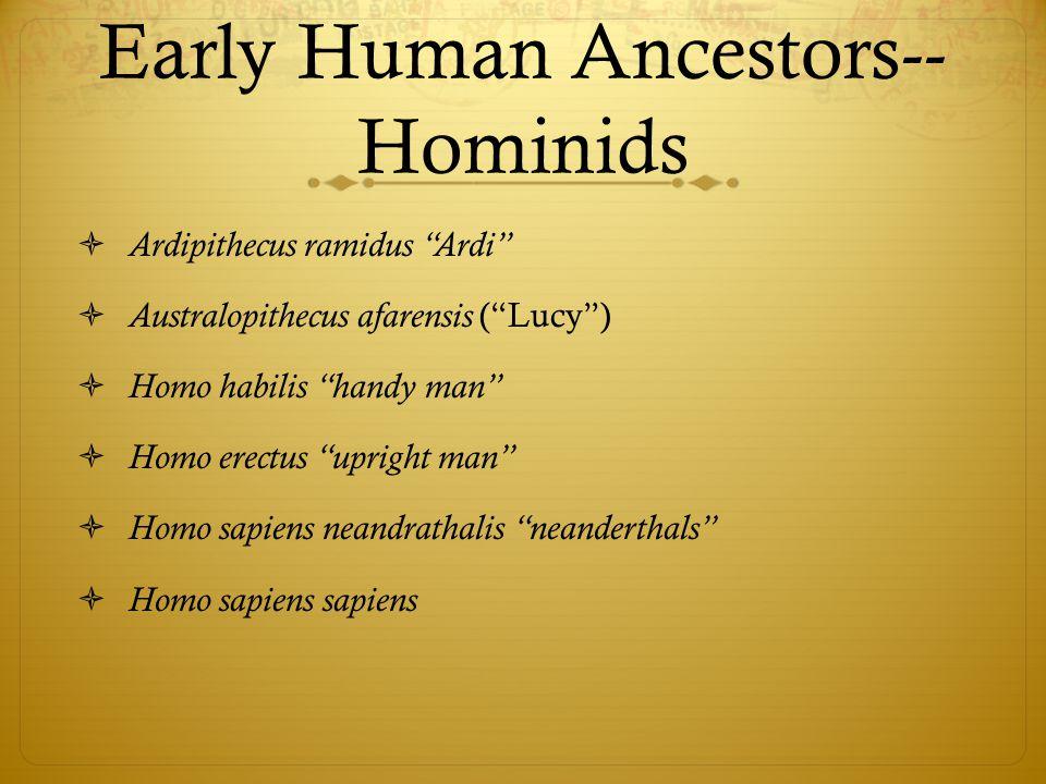 Early Human Ancestors-- Hominids  Ardipithecus ramidus Ardi  Australopithecus afarensis ( Lucy )  Homo habilis handy man  Homo erectus upright man  Homo sapiens neandrathalis neanderthals  Homo sapiens sapiens