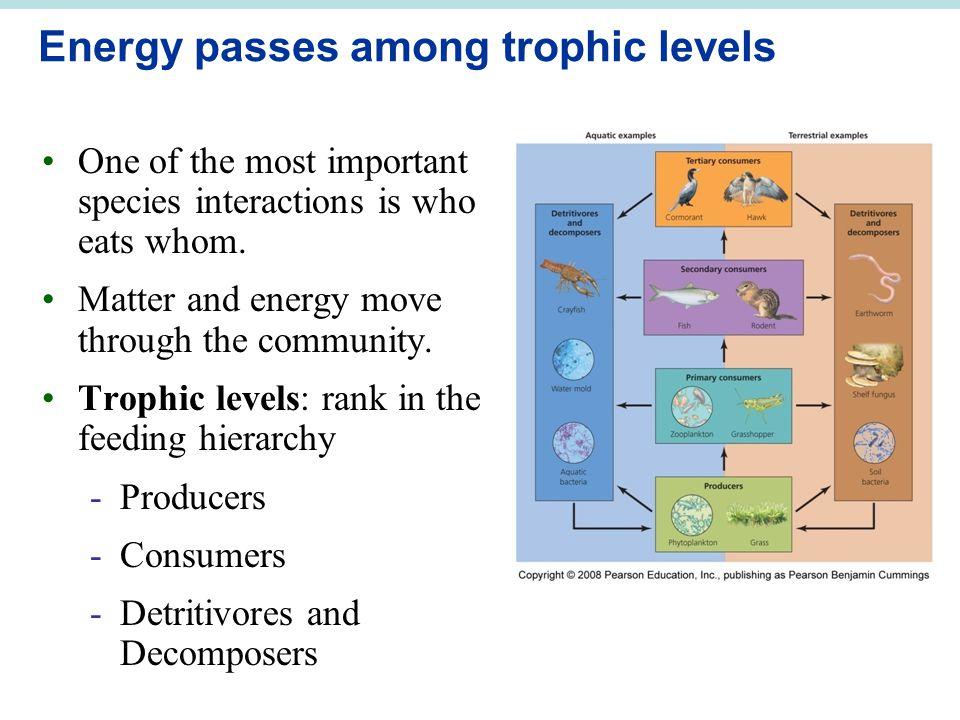 Energy passes among trophic levels One of the most important species interactions is who eats whom.