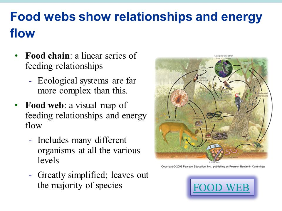 Food webs show relationships and energy flow Food chain: a linear series of feeding relationships -Ecological systems are far more complex than this.