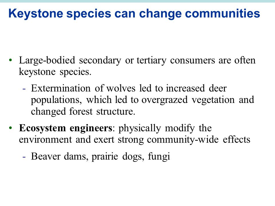 Keystone species can change communities Large-bodied secondary or tertiary consumers are often keystone species.