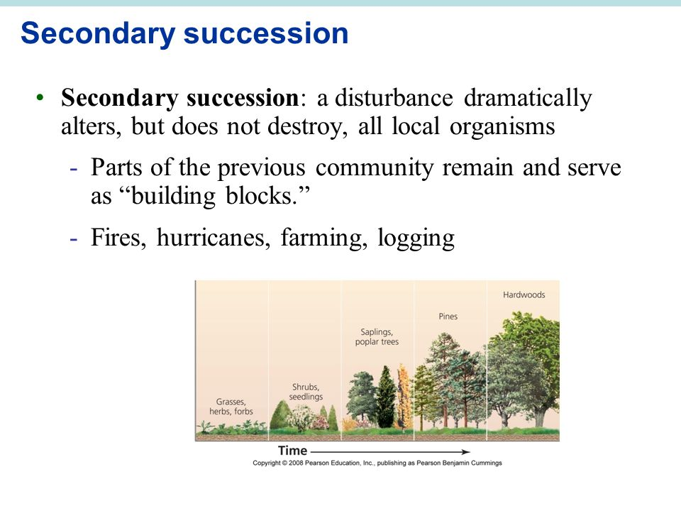 Secondary succession Secondary succession: a disturbance dramatically alters, but does not destroy, all local organisms -Parts of the previous community remain and serve as building blocks. -Fires, hurricanes, farming, logging