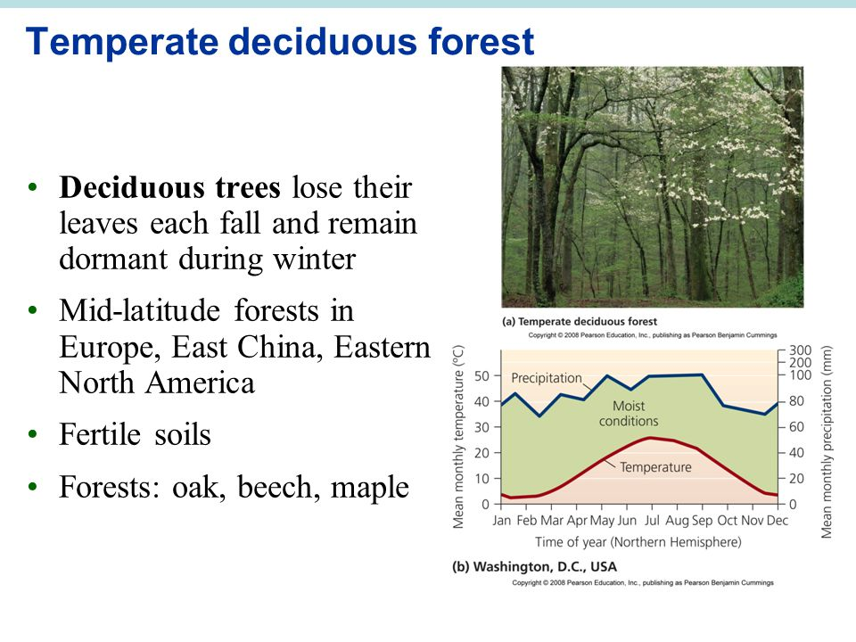 Temperate deciduous forest Deciduous trees lose their leaves each fall and remain dormant during winter Mid-latitude forests in Europe, East China, Eastern North America Fertile soils Forests: oak, beech, maple