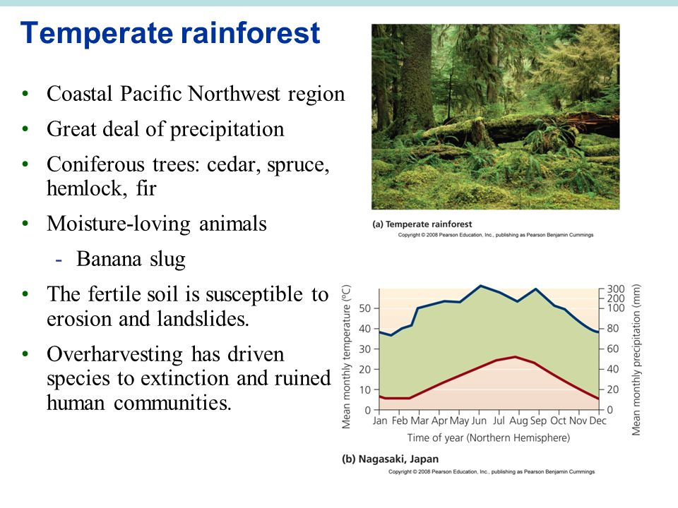 Temperate rainforest Coastal Pacific Northwest region Great deal of precipitation Coniferous trees: cedar, spruce, hemlock, fir Moisture-loving animals -Banana slug The fertile soil is susceptible to erosion and landslides.