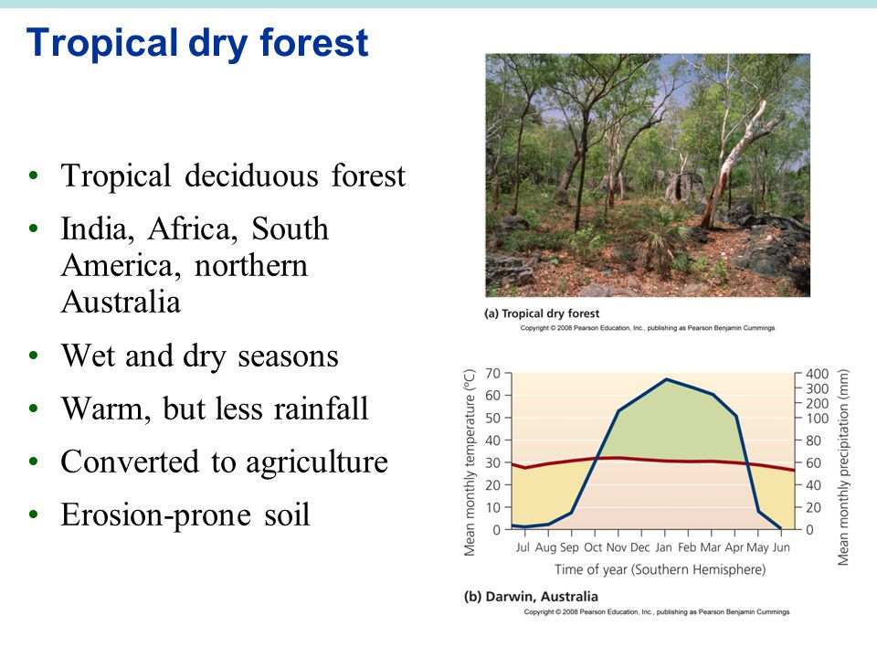 Tropical dry forest Tropical deciduous forest India, Africa, South America, northern Australia Wet and dry seasons Warm, but less rainfall Converted to agriculture Erosion-prone soil