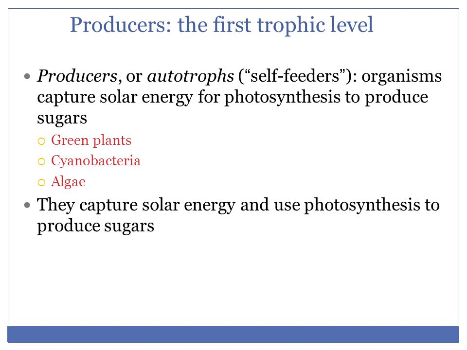 """Producers: the first trophic level Producers, or autotrophs (""""self-feeders""""): organisms capture solar energy for photosynthesis to produce sugars  Gr"""