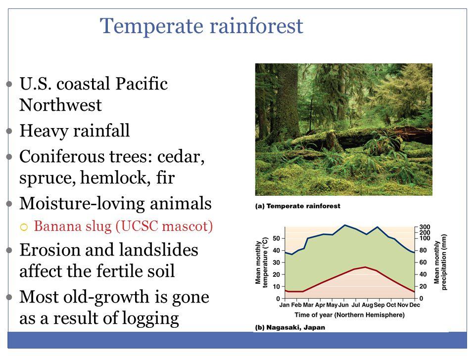 Temperate rainforest U.S. coastal Pacific Northwest Heavy rainfall Coniferous trees: cedar, spruce, hemlock, fir Moisture-loving animals  Banana slug