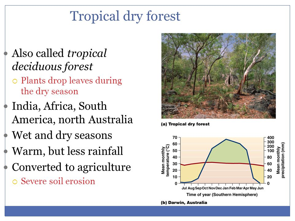 Tropical dry forest Also called tropical deciduous forest  Plants drop leaves during the dry season India, Africa, South America, north Australia Wet