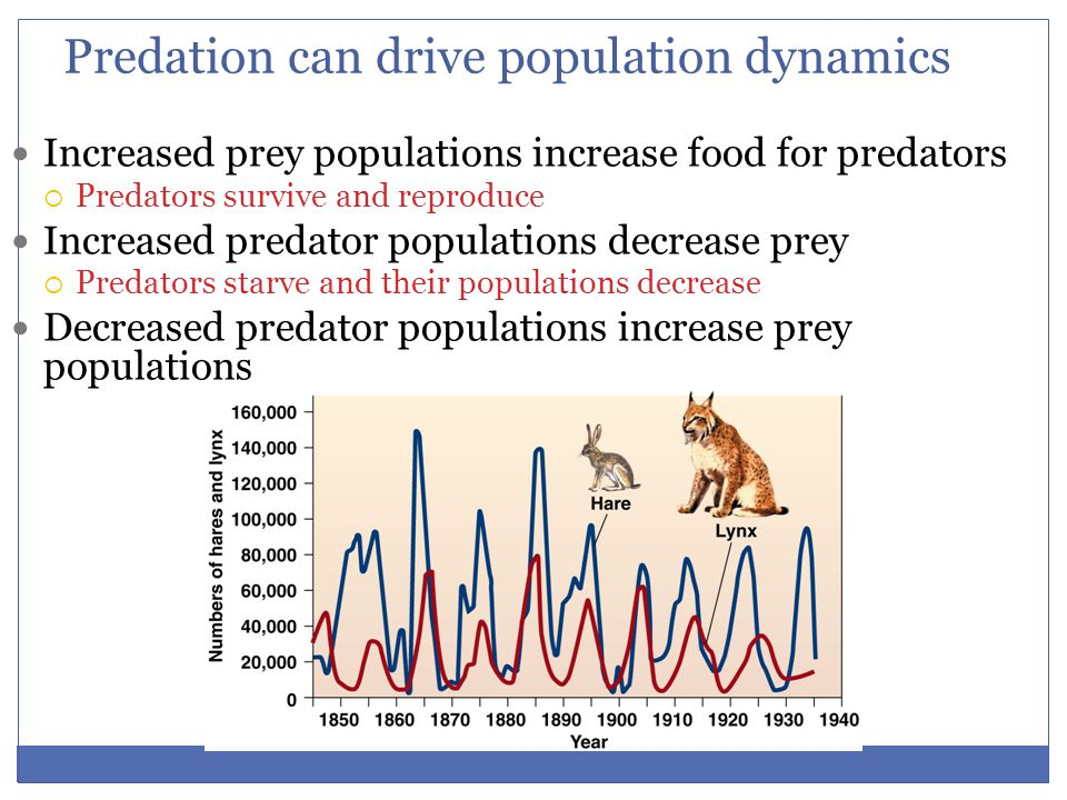 Predation has evolutionary ramifications Natural selection leads to evolution of adaptations that make predators better hunters Individuals who are better at catching prey:  Live longer, healthier lives  Take better care of offspring Prey face strong selection pressures—they are at risk of immediate death  Prey develop elaborate defenses against being eaten