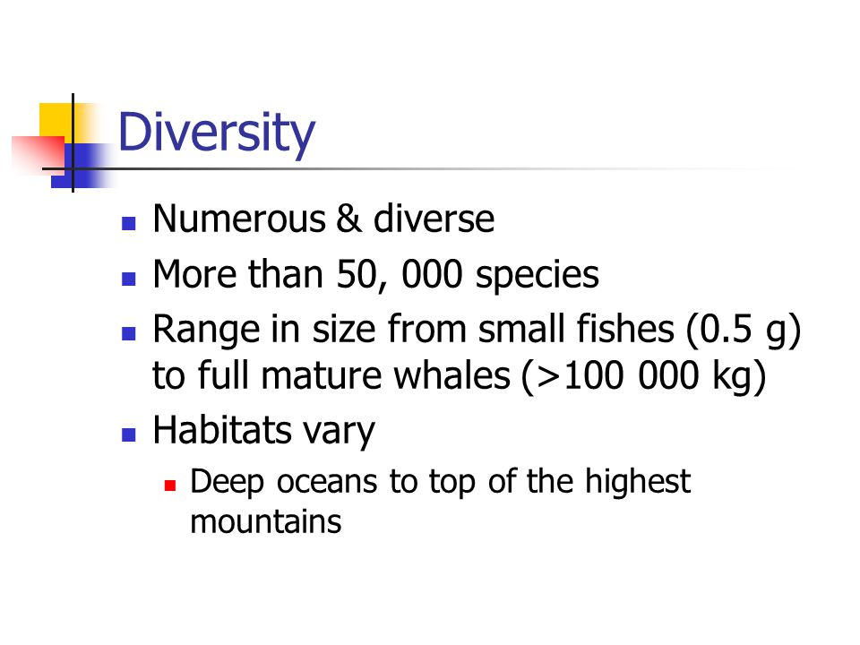 Diversity Numerous & diverse More than 50, 000 species Range in size from small fishes (0.5 g) to full mature whales (>100 000 kg) Habitats vary Deep oceans to top of the highest mountains