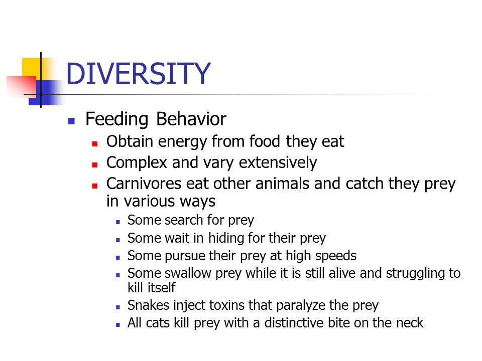 DIVERSITY Feeding Behavior Obtain energy from food they eat Complex and vary extensively Carnivores eat other animals and catch they prey in various ways Some search for prey Some wait in hiding for their prey Some pursue their prey at high speeds Some swallow prey while it is still alive and struggling to kill itself Snakes inject toxins that paralyze the prey All cats kill prey with a distinctive bite on the neck