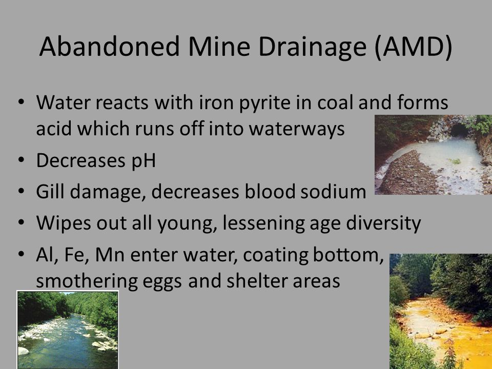 Abandoned Mine Drainage (AMD) Water reacts with iron pyrite in coal and forms acid which runs off into waterways Decreases pH Gill damage, decreases blood sodium Wipes out all young, lessening age diversity Al, Fe, Mn enter water, coating bottom, smothering eggs and shelter areas