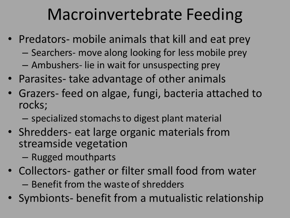 Macroinvertebrate Feeding Predators- mobile animals that kill and eat prey – Searchers- move along looking for less mobile prey – Ambushers- lie in wait for unsuspecting prey Parasites- take advantage of other animals Grazers- feed on algae, fungi, bacteria attached to rocks; – specialized stomachs to digest plant material Shredders- eat large organic materials from streamside vegetation – Rugged mouthparts Collectors- gather or filter small food from water – Benefit from the waste of shredders Symbionts- benefit from a mutualistic relationship