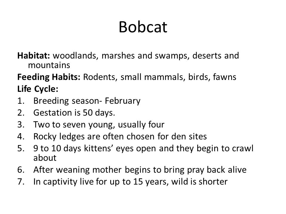 Habitat: woodlands, marshes and swamps, deserts and mountains Feeding Habits: Rodents, small mammals, birds, fawns Life Cycle: 1.Breeding season- February 2.Gestation is 50 days.