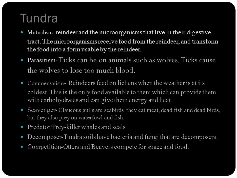 Tundra Mutualism - reindeer and the microorganisms that live in their digestive tract.