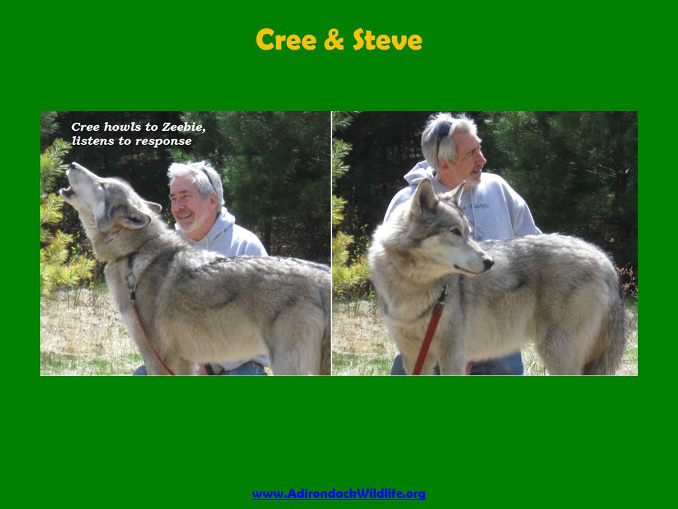 Cree & Steve www.AdirondackWildlife.org