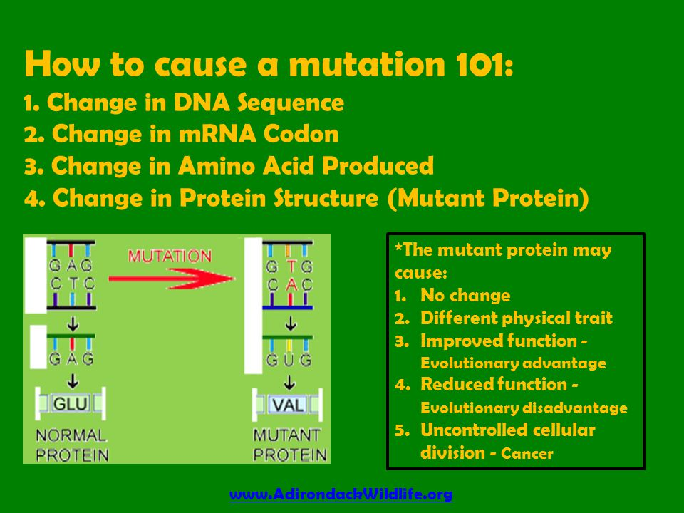 How to cause a mutation 101: 1.Change in DNA Sequence 2.