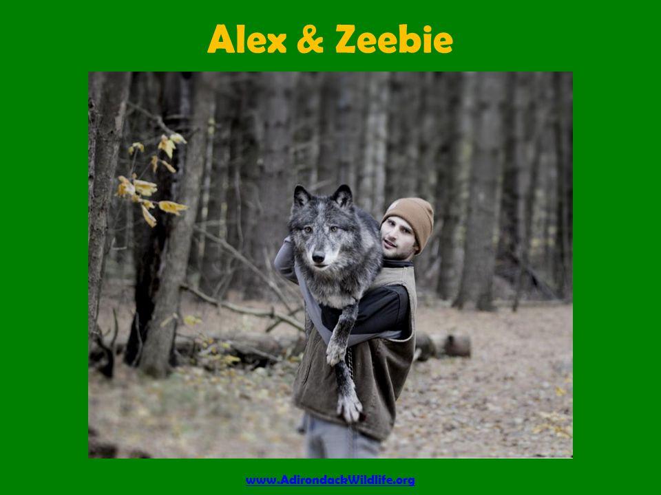 Alex & Zeebie www.AdirondackWildlife.org