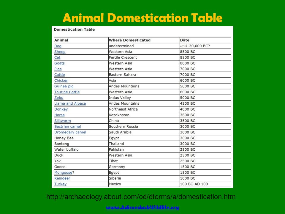 Animal Domestication Table www.AdirondackWildlife.org http://archaeology.about.com/od/dterms/a/domestication.htm