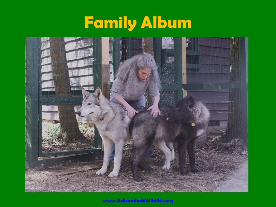Family Album www.AdirondackWildlife.org