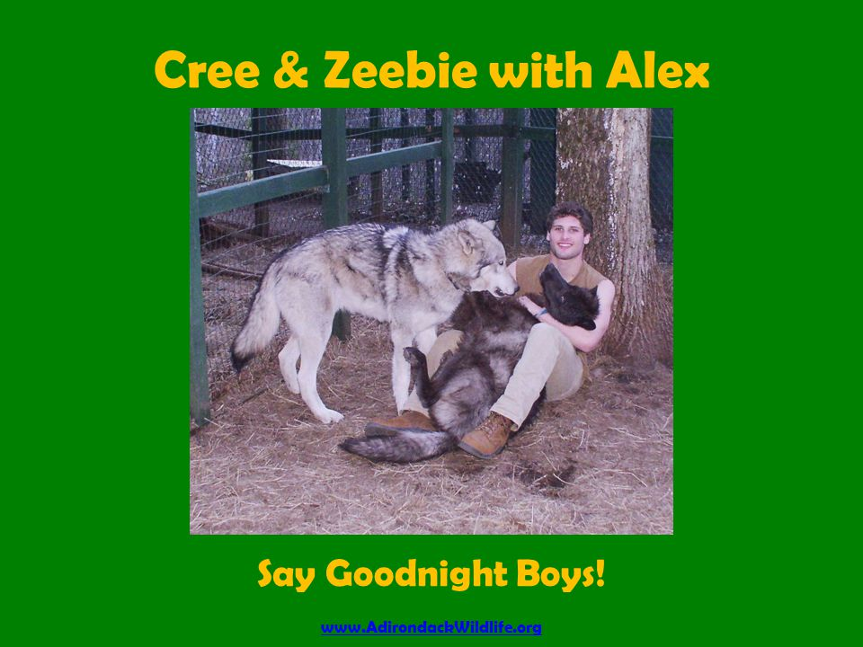 Cree & Zeebie with Alex www.AdirondackWildlife.org Say Goodnight Boys!