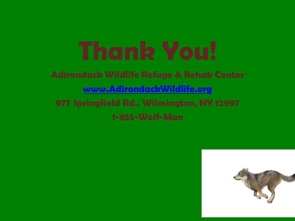 Thank You! Adirondack Wildlife Refuge & Rehab Center www.AdirondackWildlife.org 977 Springfield Rd., Wilmington, NY 12997 1-855-Wolf-Man