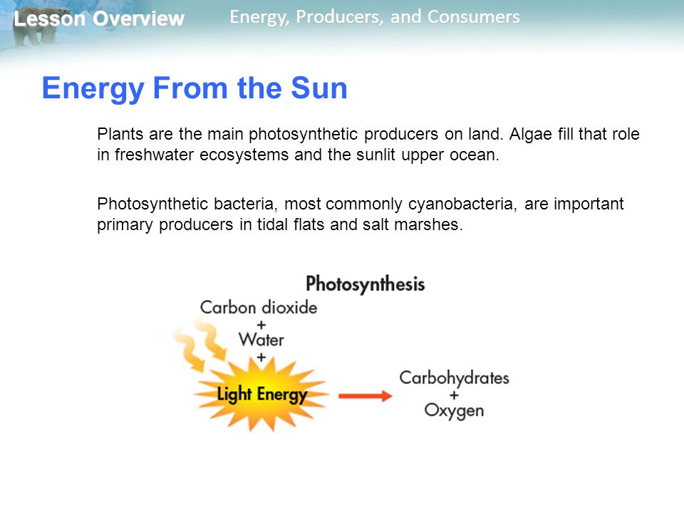 Lesson Overview Lesson Overview Energy, Producers, and Consumers Energy From the Sun Plants are the main photosynthetic producers on land. Algae fill
