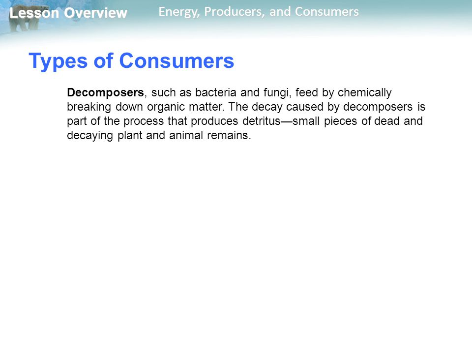Lesson Overview Lesson Overview Energy, Producers, and Consumers Types of Consumers Decomposers, such as bacteria and fungi, feed by chemically breaki