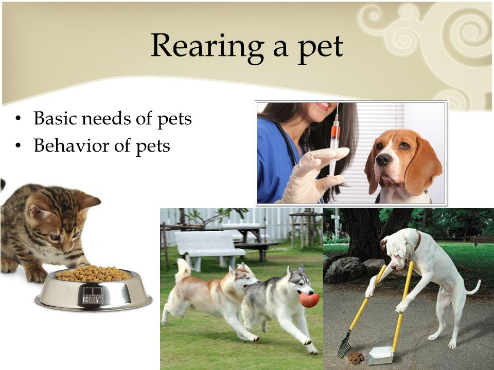 Rearing a pet Basic needs of pets Behavior of pets