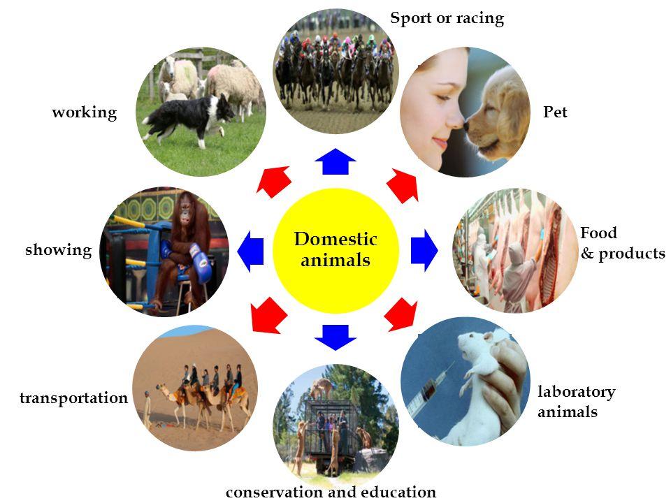 Companion animals & Pets Is companion animal the same as a pet.
