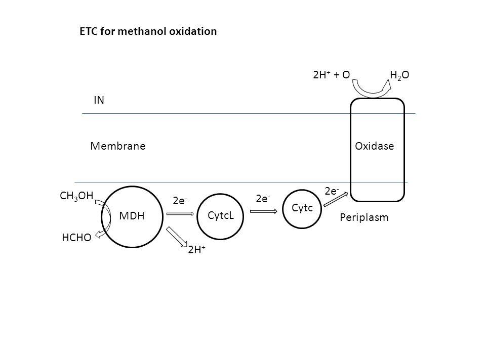 MDH CytcL Cytc Oxidase CH 3 OH HCHO H2OH2O IN Membrane Periplasm 2H + + O 2e - 2H + 2e - ETC for methanol oxidation
