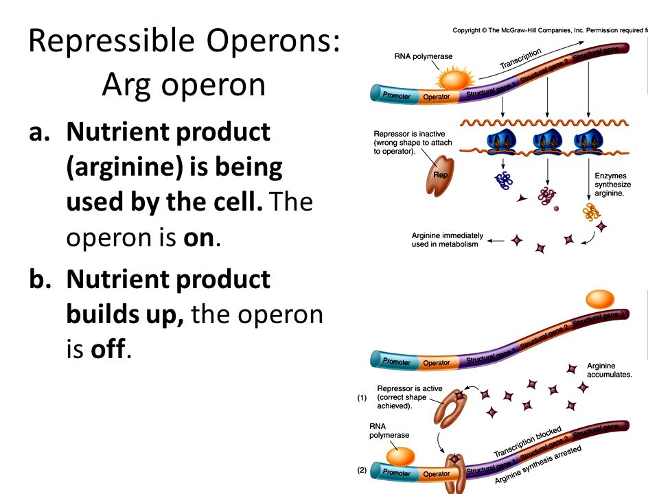 Transposons Jumping genes Mobile genetic elements Move from place to place in the genome, plasmids, and viral genomes Disrupt genes when they land May mobilize other genes (like antibiotic resistance) (1) (2)(4)(3) Copyright © The McGraw-Hill Companies, Inc.