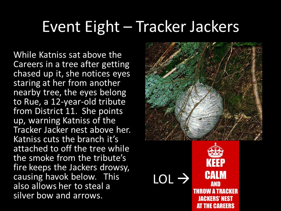 Event Eight – Tracker Jackers While Katniss sat above the Careers in a tree after getting chased up it, she notices eyes staring at her from another n