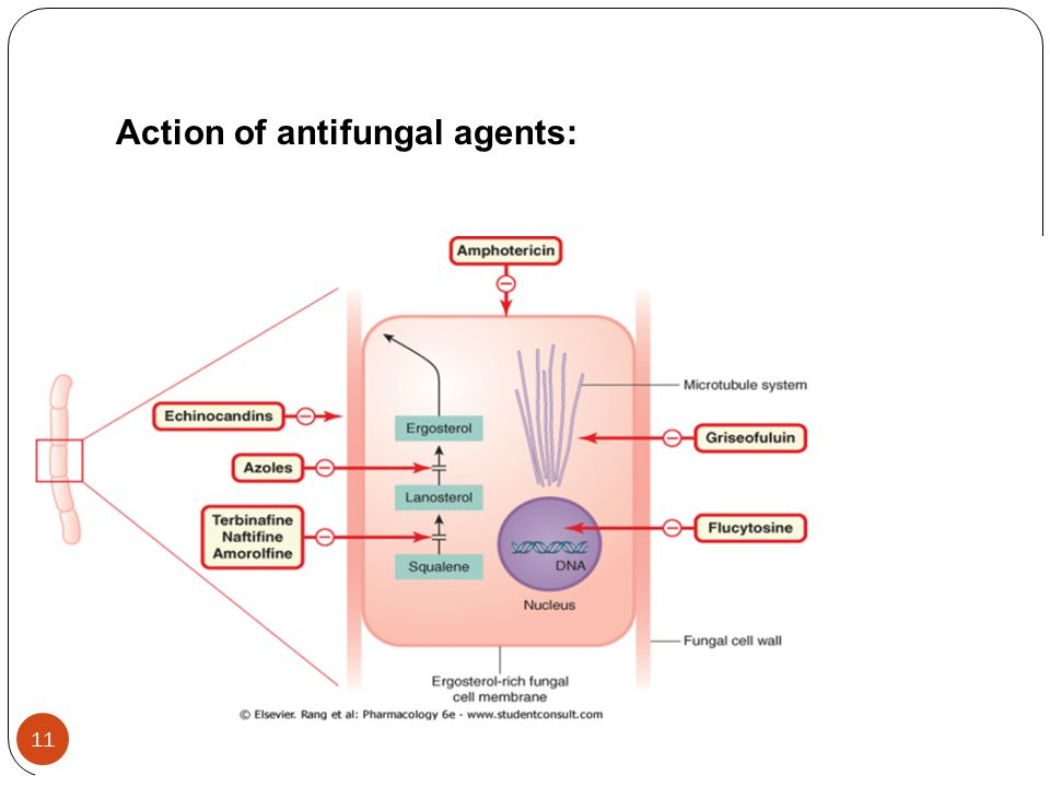 Action of antifungal agents: 11