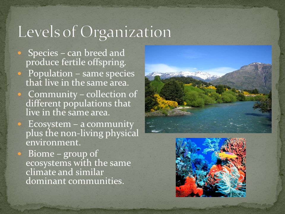 Species – can breed and produce fertile offspring. Population – same species that live in the same area. Community – collection of different populatio