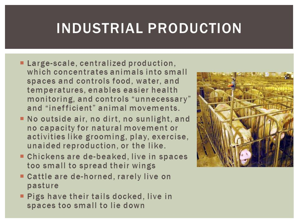  Large-scale, centralized production, which concentrates animals into small spaces and controls food, water, and temperatures, enables easier health monitoring, and controls unnecessary and inefficient animal movements.