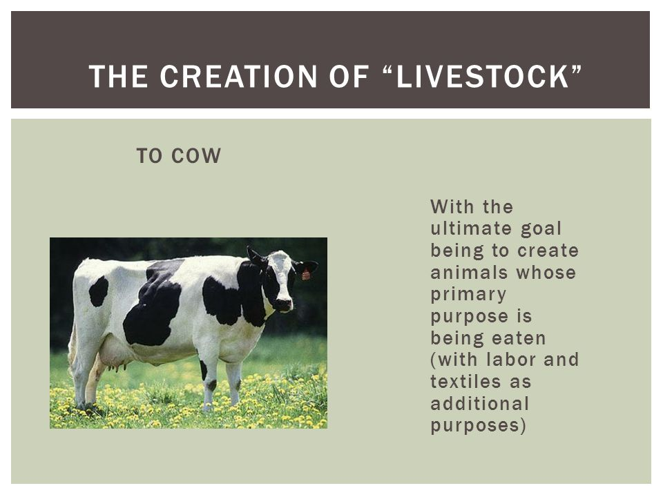 TO COW With the ultimate goal being to create animals whose primary purpose is being eaten (with labor and textiles as additional purposes) THE CREATION OF LIVESTOCK