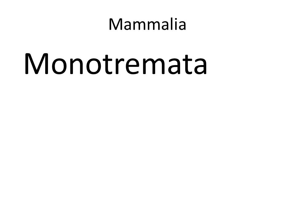 Mammalia Monotremata