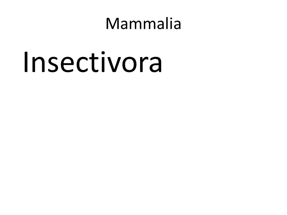Mammalia Insectivora