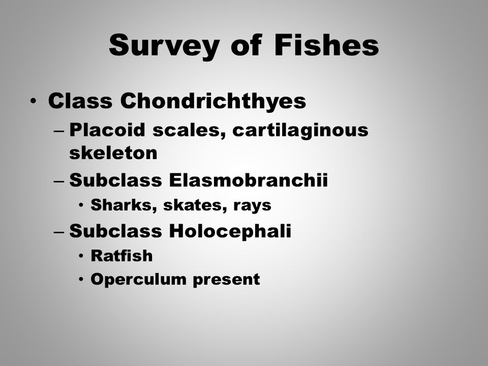 Survey of Fishes Class Chondrichthyes – Placoid scales, cartilaginous skeleton – Subclass Elasmobranchii Sharks, skates, rays – Subclass Holocephali R