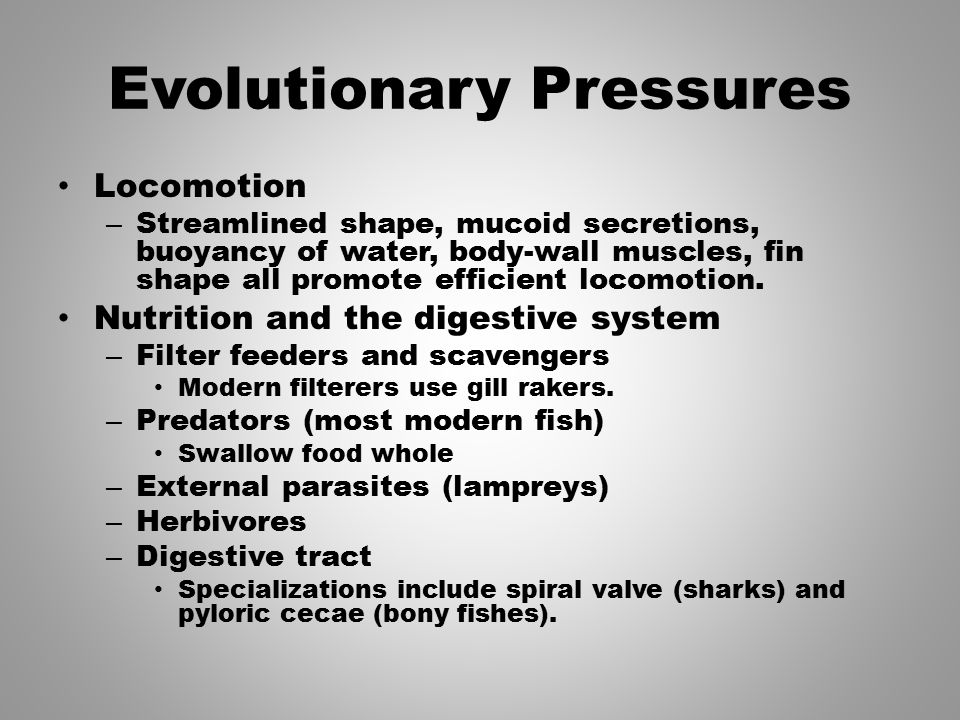 Evolutionary Pressures Locomotion – Streamlined shape, mucoid secretions, buoyancy of water, body-wall muscles, fin shape all promote efficient locomo