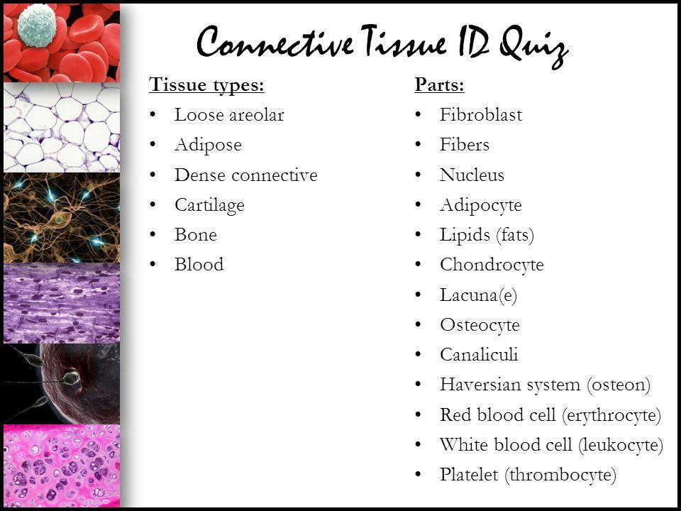 Connective Tissue ID Quiz Tissue types: Loose areolar Adipose Dense connective Cartilage Bone Blood Parts: Fibroblast Fibers Nucleus Adipocyte Lipids