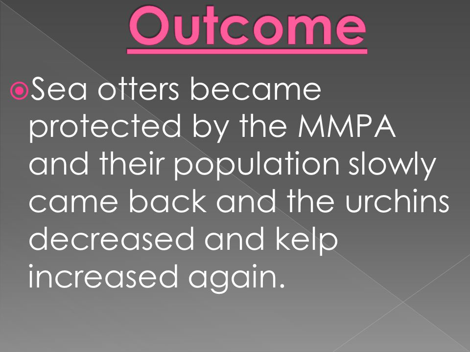  Sea otters became protected by the MMPA and their population slowly came back and the urchins decreased and kelp increased again.