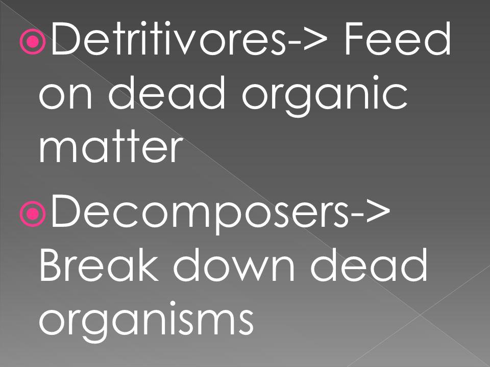  Detritivores-> Feed on dead organic matter  Decomposers-> Break down dead organisms