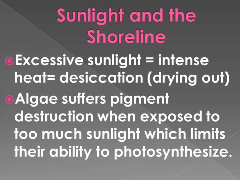  Excessive sunlight = intense heat= desiccation (drying out)  Algae suffers pigment destruction when exposed to too much sunlight which limits their