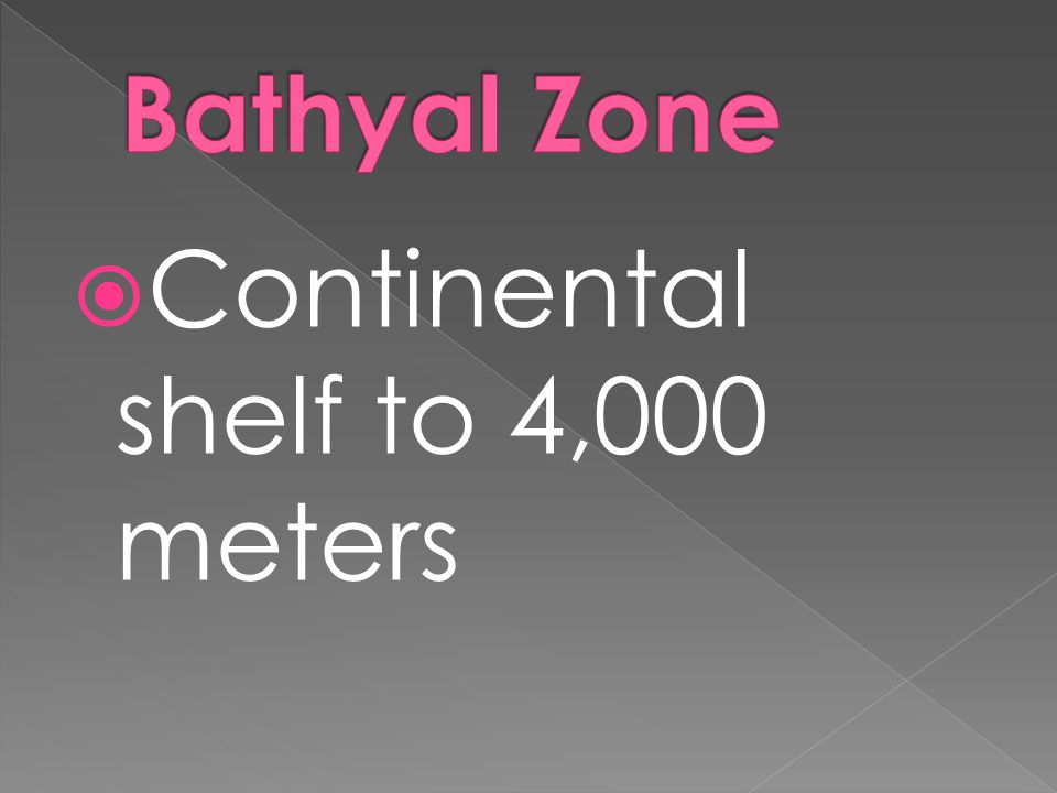  Continental shelf to 4,000 meters