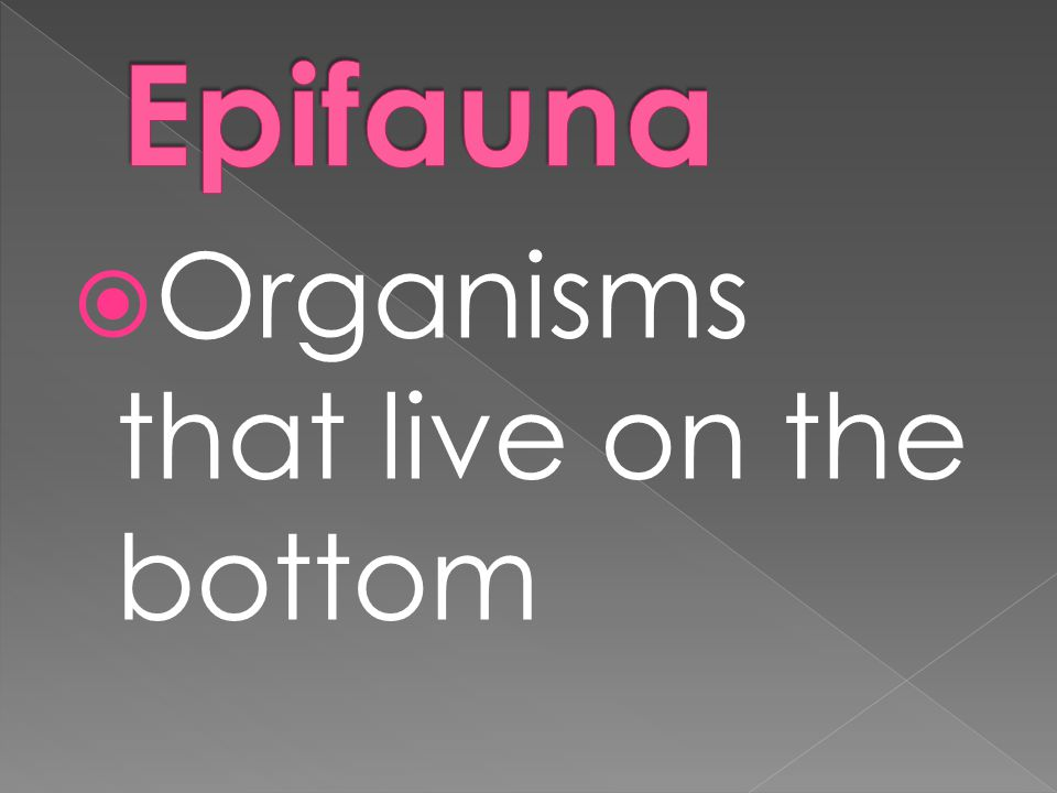  Organisms that live on the bottom